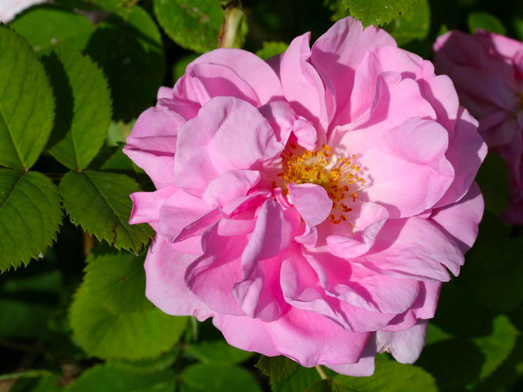 Asphalt Rainbow The Story Of Rose Alexander Cm Fragrance